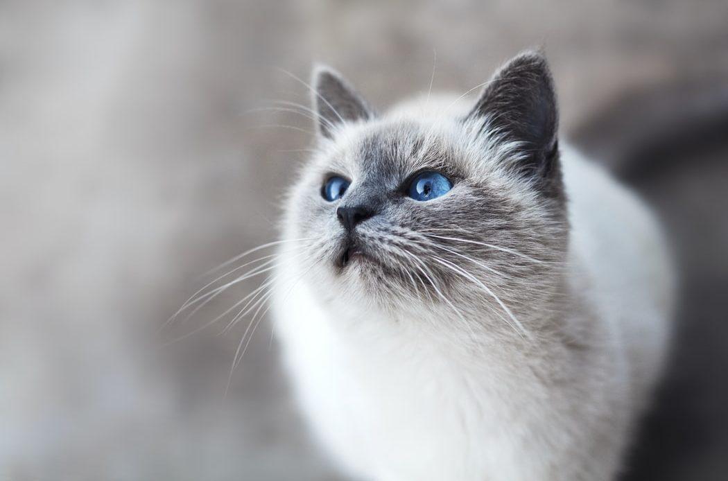 Почему кошка сопит носом?