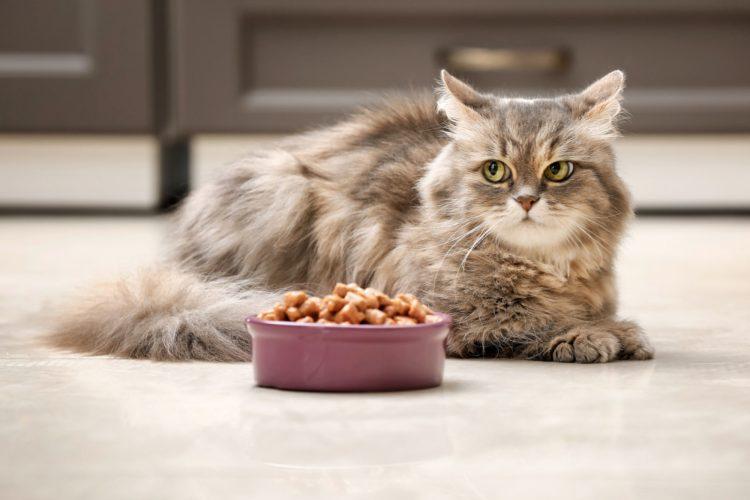 Как кормить стерилизованную кошку