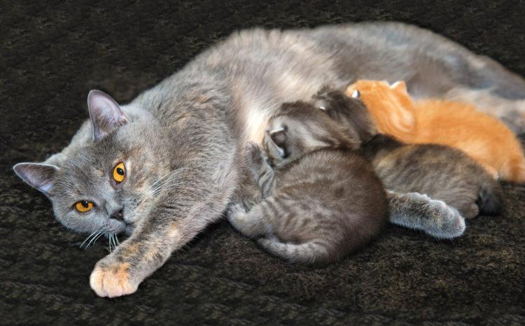 Как кошка заботится о своем потомстве