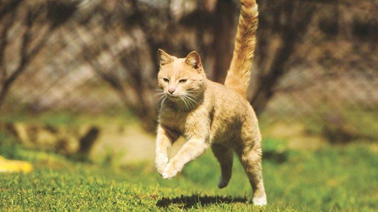 Как кошка защищается от врагов?