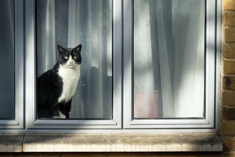 Кошки способны чувствовать приближение природных катаклизмов