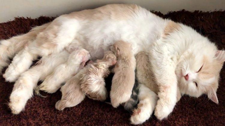Cледует оставить кошку наедине с котятами, чтобы сформировались необходимые связи