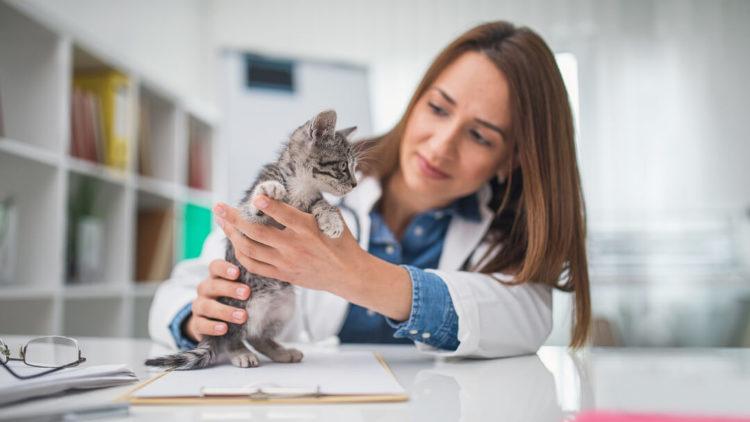 Для определения пола котенка обратитесь к ветеринару