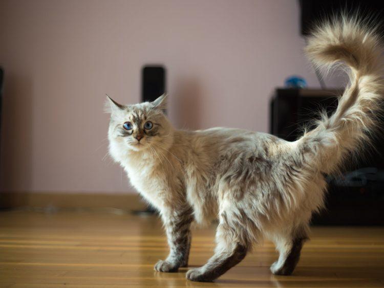 Кошка хочет кота, как успокоить