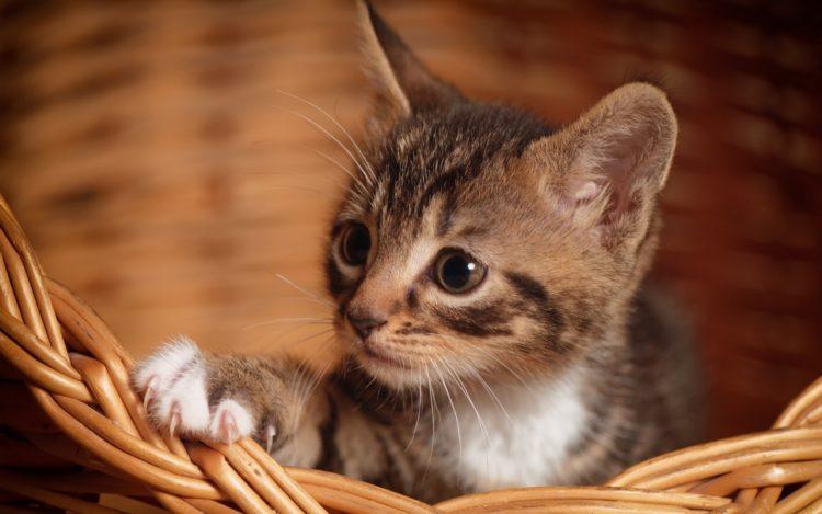 Почему кошка не растет?