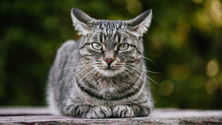Как долго живет кошка