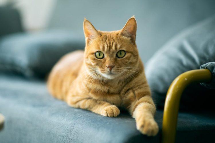 Животные больше подвержены действию анестезии и обезболивающих средств, чем непосредственно болевым ощущениям