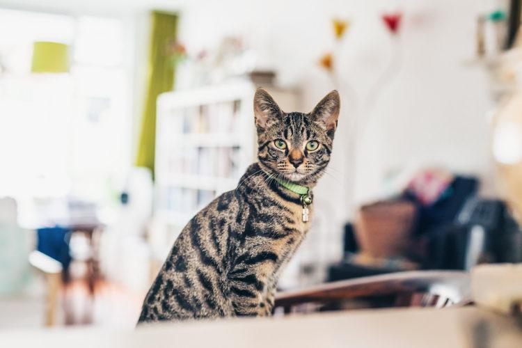 Котята и взрослые особи восприимчивы к тренировке с использованием кликера