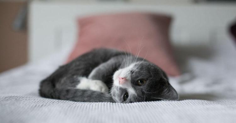Отдых с расслабленной мурчащей кошкой в конце трудного дня – это успокаивающий массаж для души