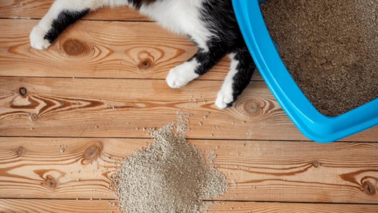 Как часто кошка ходит в туалета