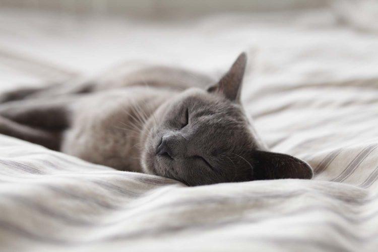 Когда кошка остается дома одна, она в основном спит и расслабляется.