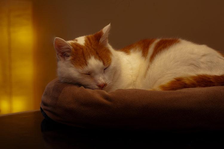 Обычно кошки возвращаются домой в день операции, а снятие швов осуществляется через 7-10 дней