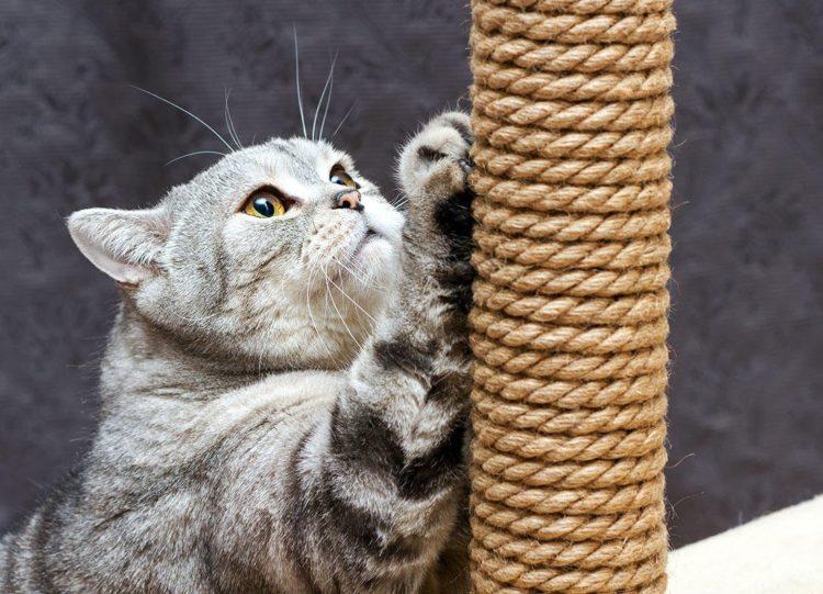 Кошка царапает, чтобы оставить метки