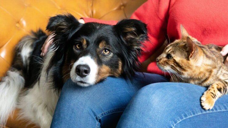 Позволяйте животным взаимодействовать только под вашим контролем.