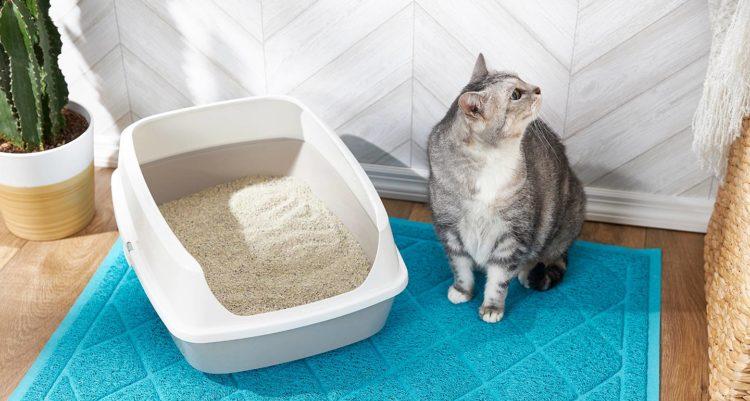 Как часто должна какать кошка?