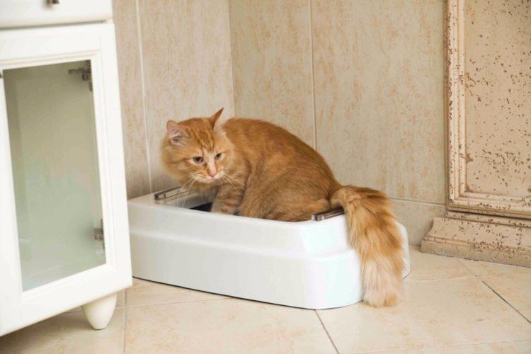 Почему кошка мяукает, когда ходит в туалет?