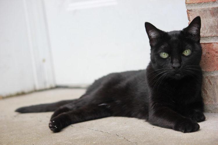 Пантера - подходящее имя для черной красавицы