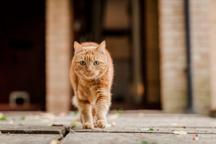 Как найти убежавшую кошку