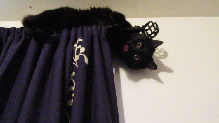 Как отучить кошку лазить по шторам?