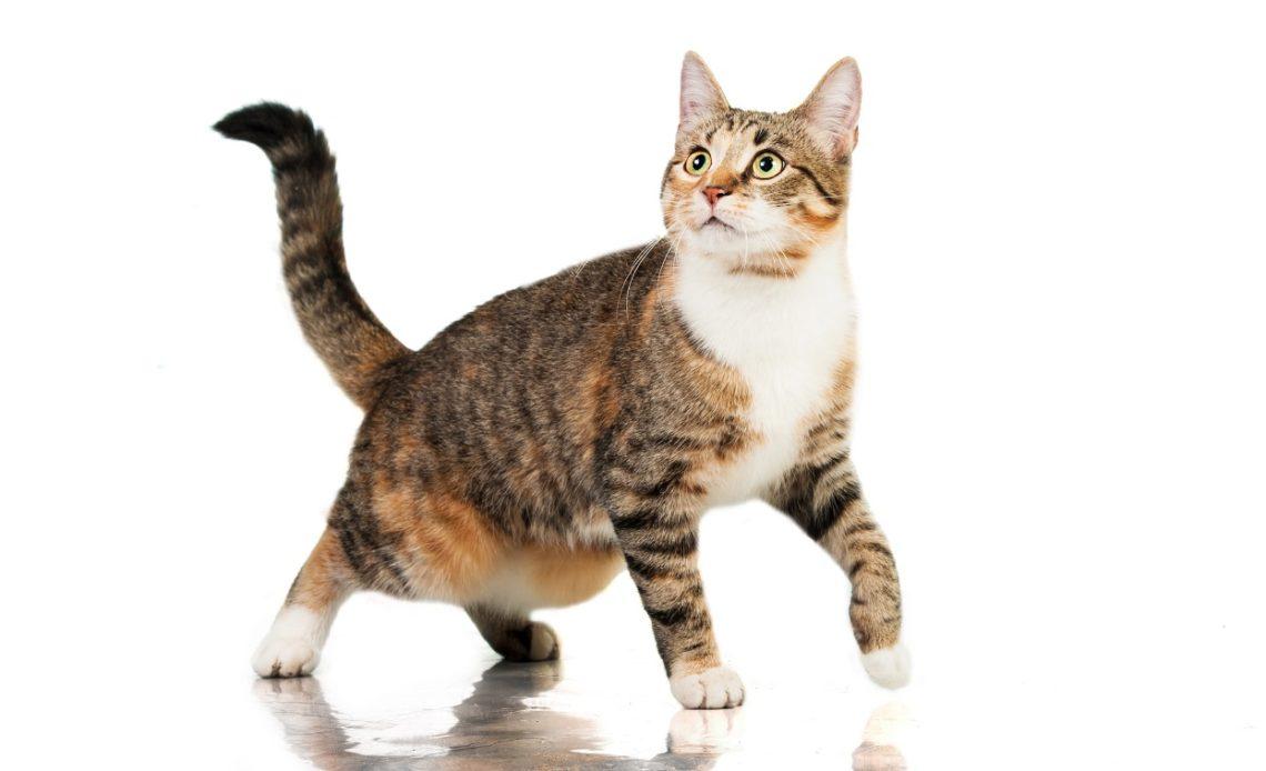 Почему у кошки висит кожа на животе?