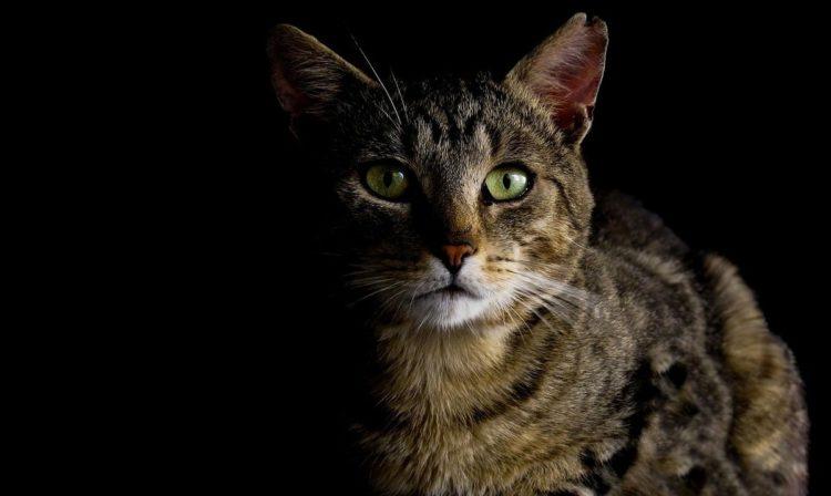 Управляйте ночным поведением животного.