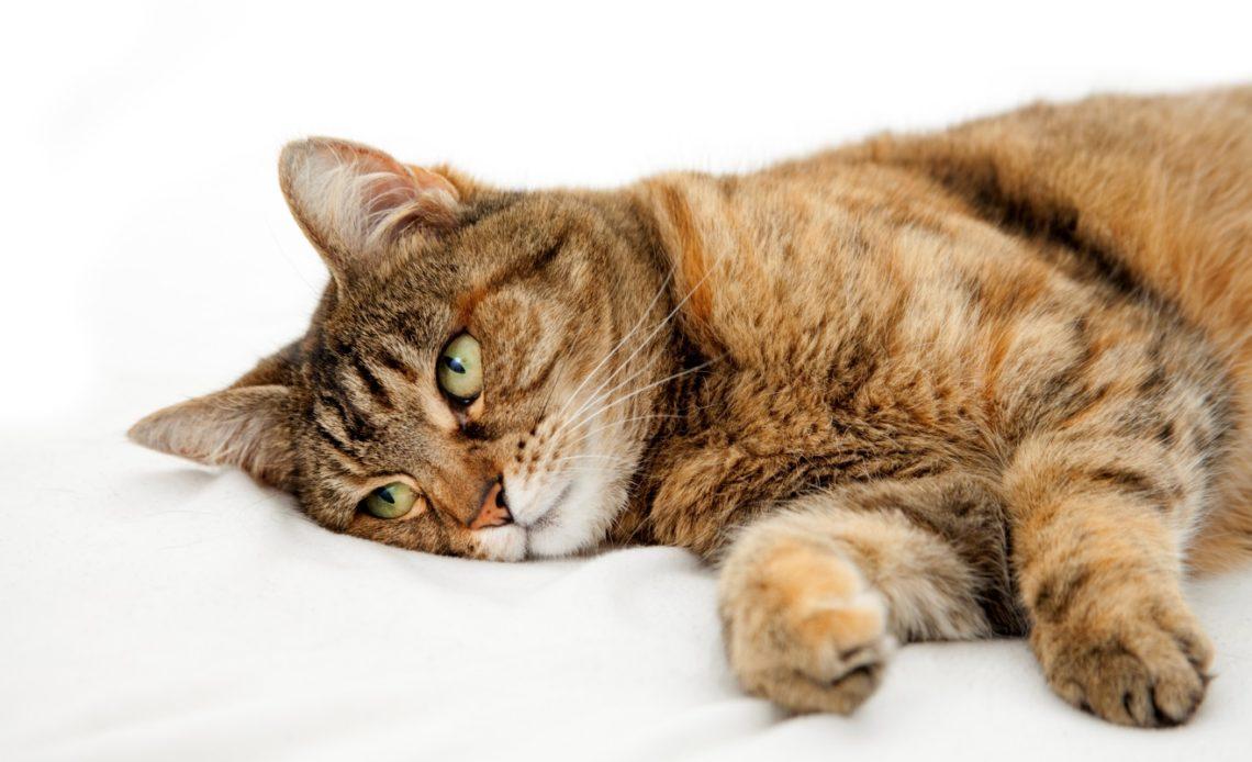 Как понять, что кошка умирает?