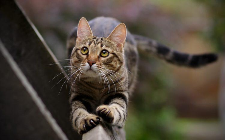 Как отучить кошку обдирать обои?