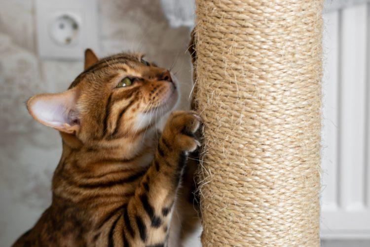 Почему кошки точат когти?