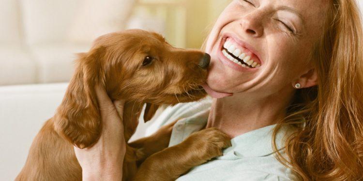Как реагировать хозяину на собачьи «поцелуи»?
