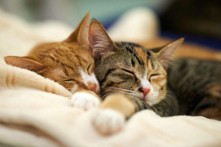 О чем говорит кошачья поза для сна?