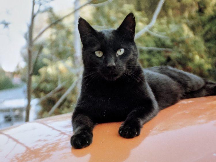 Почему бы ни назвать черную кошку Чес?