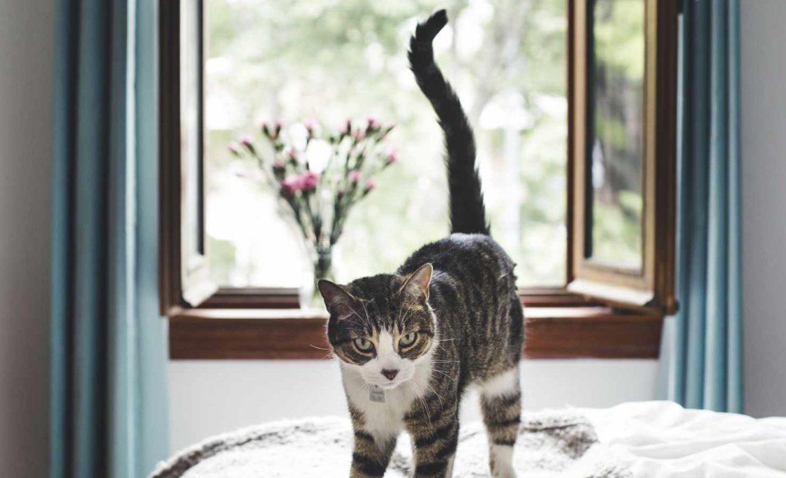 Как кошка метит территорию
