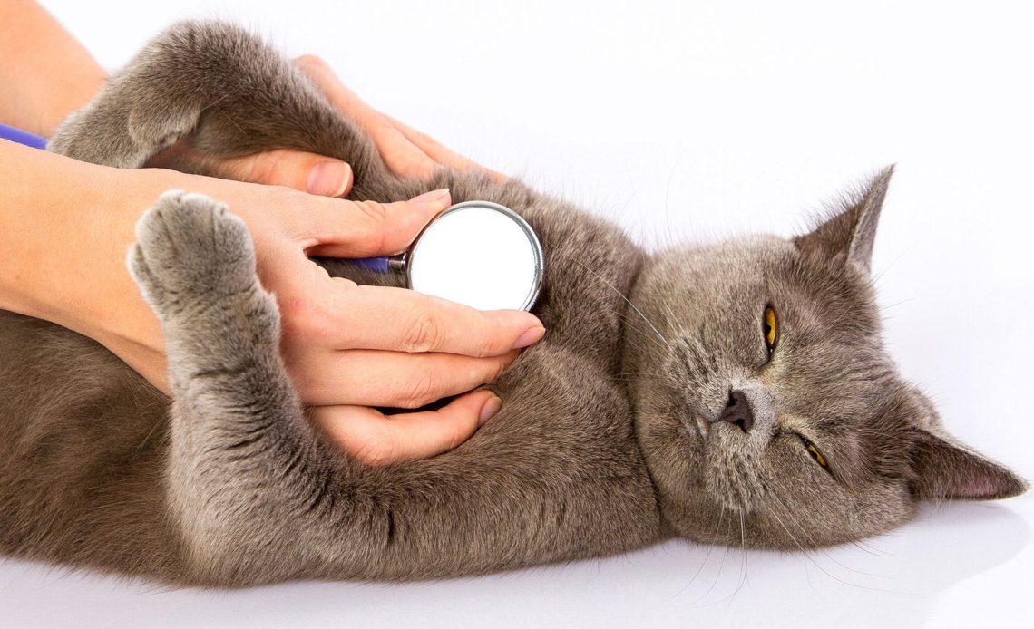 Почему кошка тяжело дышит?