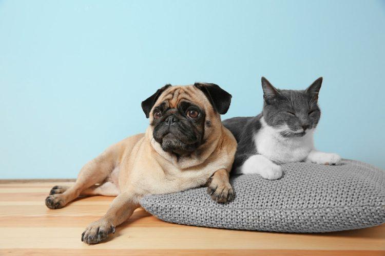 Почему собаки едят экскременты кошек?