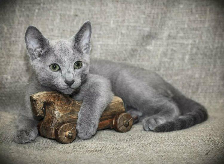 Как правильно и где купить. Сколько стоят котята?