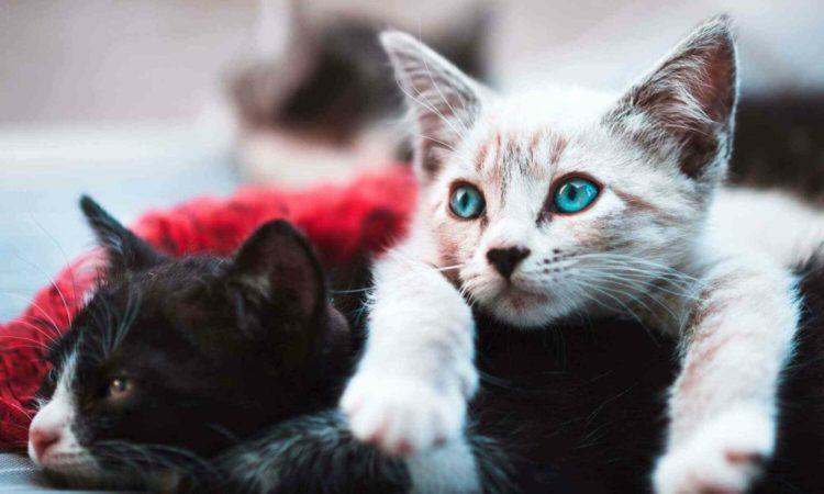 Как кошка уживается с кошкой?