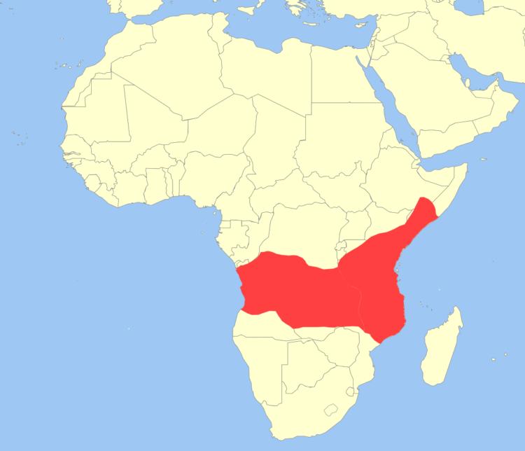 Бабуин