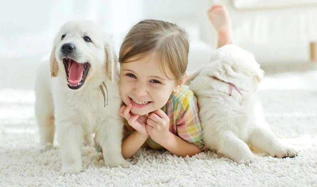 ТОП-15 пород собак, подходящих для детей