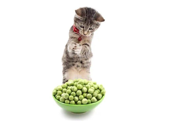 Можно ли кошкам горох