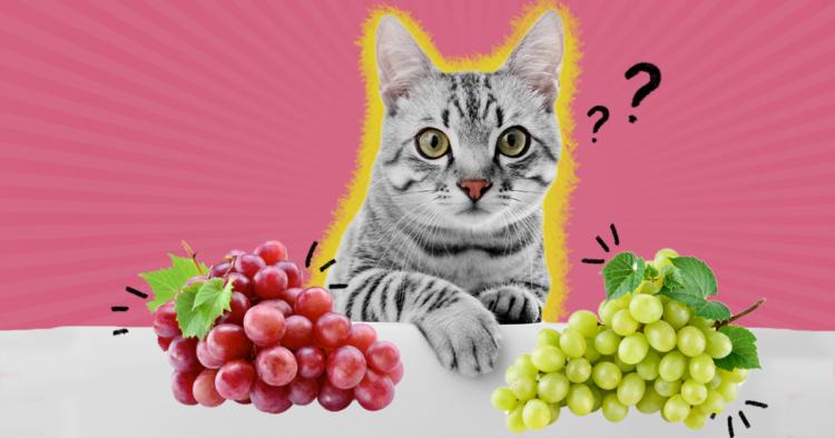 Можно ли кошкам виноград