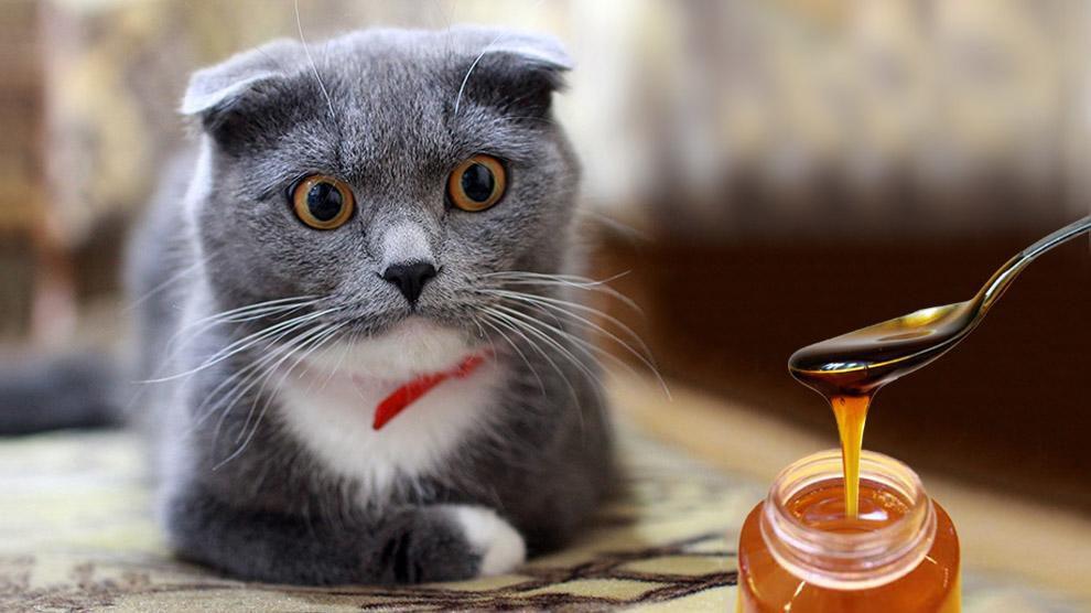 Можно ли кошкам мед