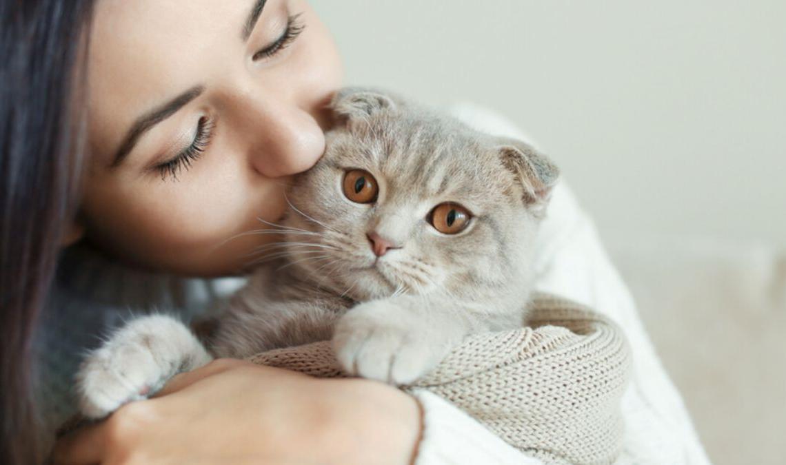 Самые привязанные к хозяину породы кошек