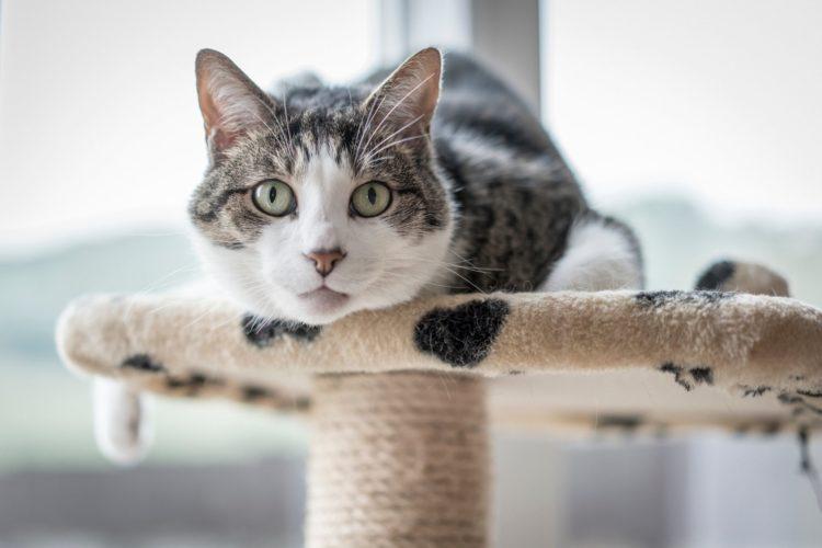 Капли и таблетки от клещей для кошек