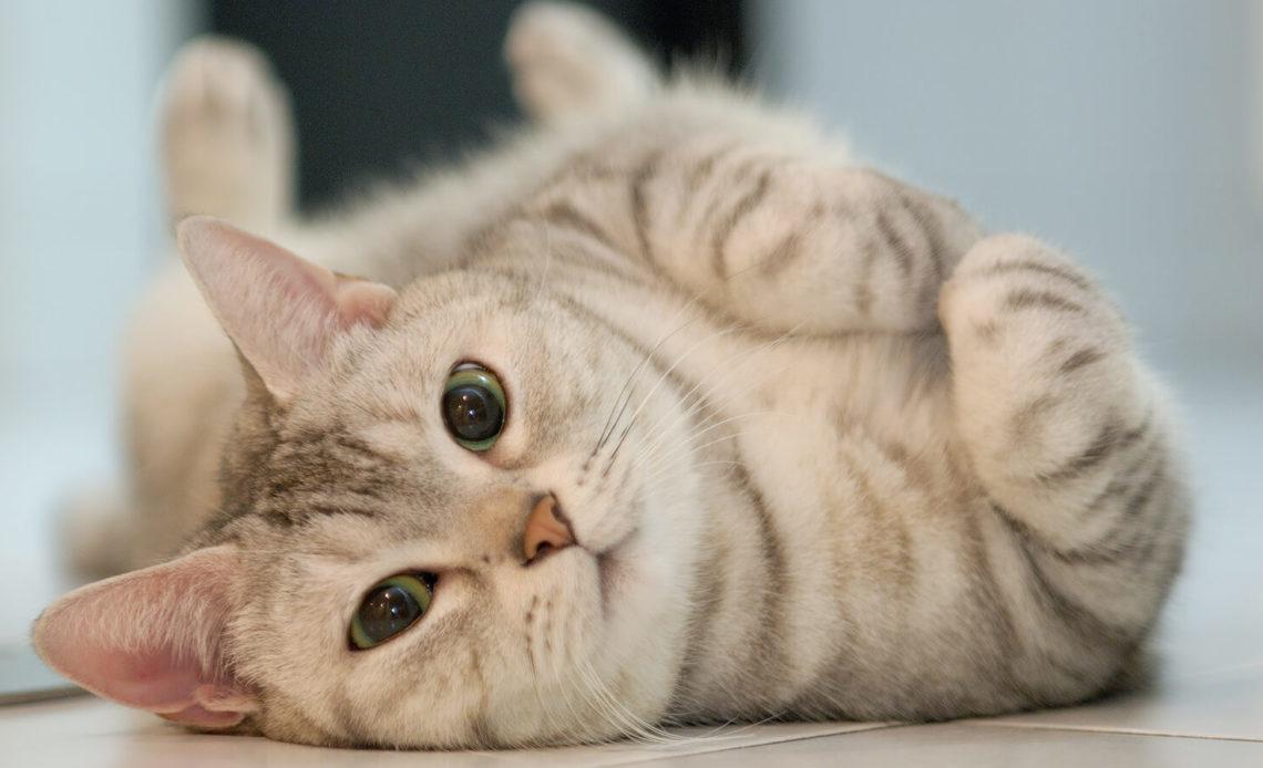 Таблетки и капли для кошек от гуляния