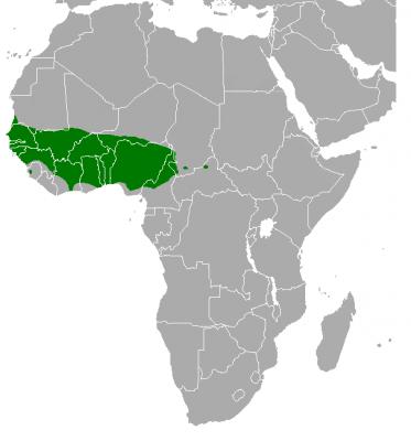 Ареал обитания сенегальских длиннокрылых попугаев
