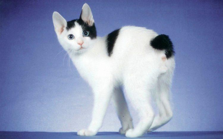 Породы черно-белых кошек