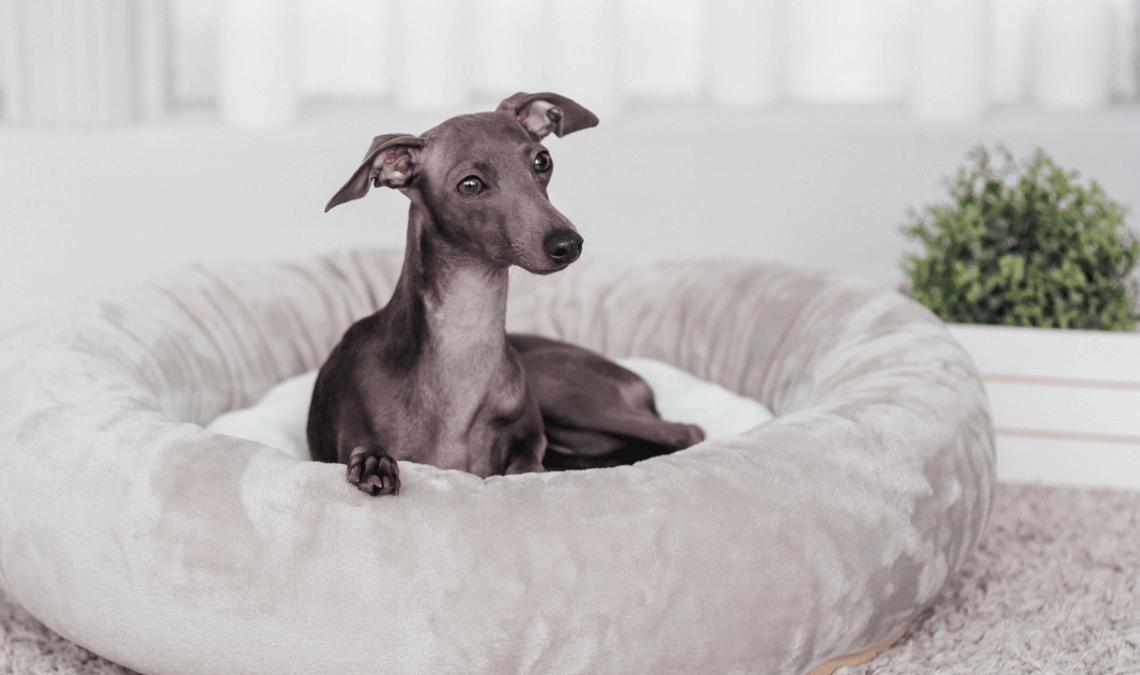 Итальянские породы собак