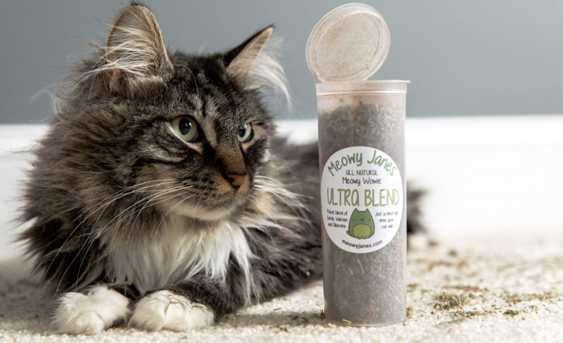 Можно ли кошкам давать валерьянку?