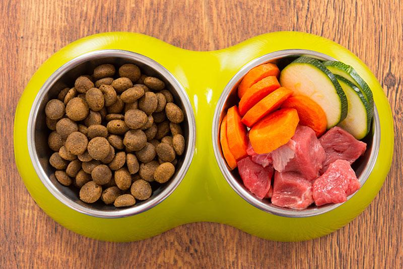 Корм или натуральное питание для собак?