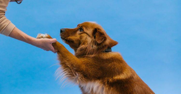 Что делать, если собака - не пищевик?